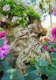 Оформление сада пня. Стоковые Фото