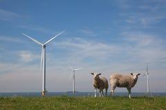 Оффшорное Windturbines в IJsselmeer, Нидерландах с st Стоковая Фотография RF