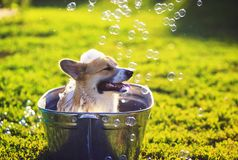 Охлажено милое смешное положение собаки щенка в металле t, помытый на улице летом на горячий солнечный день с сияющим мылом стоковое фото