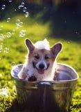 Охлажено милое смешное положение собаки щенка в металле t, помытый на улице летом на горячий солнечный день с сияющим мылом стоковые изображения