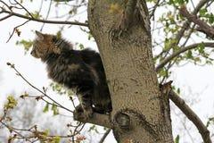 Охота птицы в дереве Стоковая Фотография RF