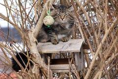 Охота птицы в дереве Стоковые Изображения