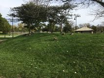 Охота утки Стоковая Фотография RF