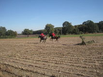 Охотиться с лошадями Стоковые Изображения RF