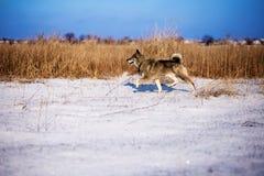 Охотиться с собакой Стоковое Изображение
