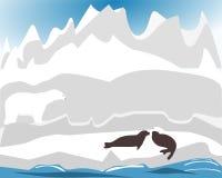 охотиться polarbear уплотнение Стоковое Фото