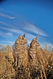 2 охотника снимая уток на солнечный день Стоковое Изображение RF