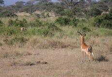 Охотник встречает свою добычу стоковое изображение rf