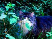 Охотник в саде стоковые изображения