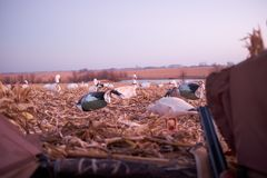 Охотник в тайнике рассматривая вне decoys Стоковое Фото