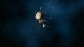 Охотник ночи Стоковое фото RF