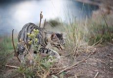 охотник одичалый Стоковая Фотография