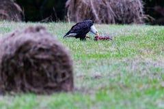 Охотник повернул выноситель стоковое фото rf