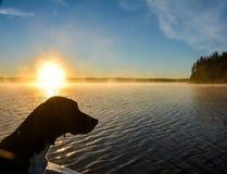 Охотничья собака и восход солнца на озере Стоковое фото RF