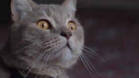 Охотящся эмоции кота который увидел птиц сток-видео