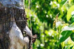 охрана животных природы полости птенеца птицы Стоковые Изображения RF