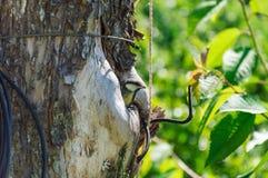 охрана животных природы полости птенеца птицы Стоковое Фото