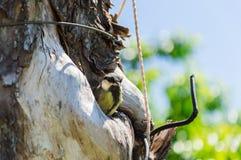 охрана животных природы полости птенеца птицы Стоковые Фото