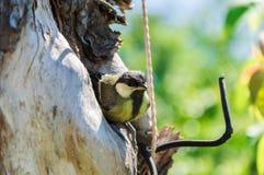 охрана животных природы полости птенеца птицы Стоковые Фотографии RF