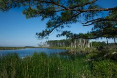 Охраняемая природная территория соотечественника Blackwater Стоковые Фото