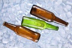 Охлаждая пив Стоковое Изображение RF