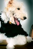 очарование собаки Стоковое фото RF