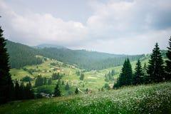 Очаровательная солнечная панорама луга и coutryside маргаритки на предпосылке гор предусматриванных с толстым зеленым цветом Стоковая Фотография