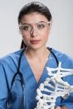 Очаровательный женский доктор держа модель дна Стоковое Изображение