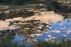 Очаровательный пруд в Wilanow Столица Польши - Варшавы стоковое фото rf