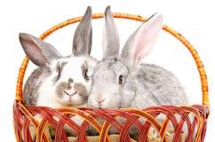 2 очаровательных кролика сидя в корзине Стоковое фото RF