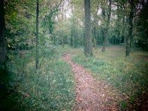 Очаровательная тропа леса Стоковые Изображения RF