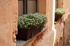 Очаровательные домашние цветки стоковое фото rf