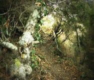 Очаровательный путь Стоковое Фото