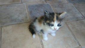 Очаровывая котенок стоковая фотография rf
