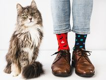 Очаровывая ноги котенка и людей r стоковая фотография