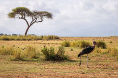 Очень большие птицы вызвали marabous Стоковое Фото