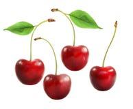 Очень вкусная красная вишня Стоковое Изображение