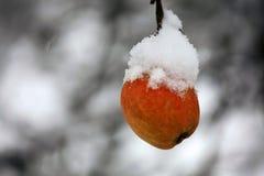 Очень вкусное красное яблоко, покрытое с медленным падая снегом, на ветви в зимнем времени стоковое фото