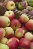 Очень вкусные свежие яблоки в клетях Стоковое Фото
