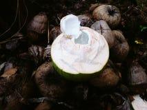 Очень вкусный кокос Стоковое фото RF