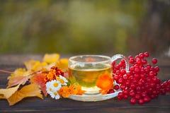 Очень вкусный чай осени в красивом стеклянном шаре на таблице Стоковое фото RF