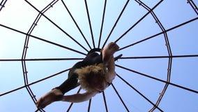 Очень гибкая женщина в гетры сгабривает на кольце для воздушной акробатики, взгляде снизу движение медленное видеоматериал