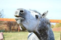 Очень красивая лошадь стоковое изображение rf
