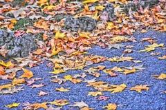 очень красивый всход в парке Стоковая Фотография RF
