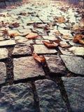 очень красивый всход в парке Стоковая Фотография
