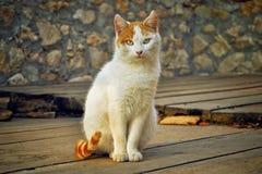 Очень красивый кот Стоковое фото RF
