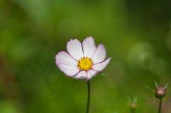 Очень красивый цветок стоковое изображение