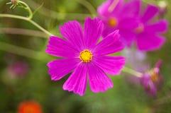 Очень красивый цветок стоковые фотографии rf