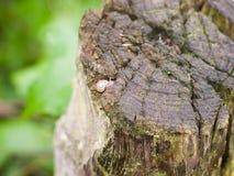Очень малая улитка на верхней части деревянного столба конца вверх стоковое фото