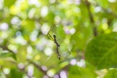 Очень маленький паук на зеленой предпосылке стоковая фотография rf